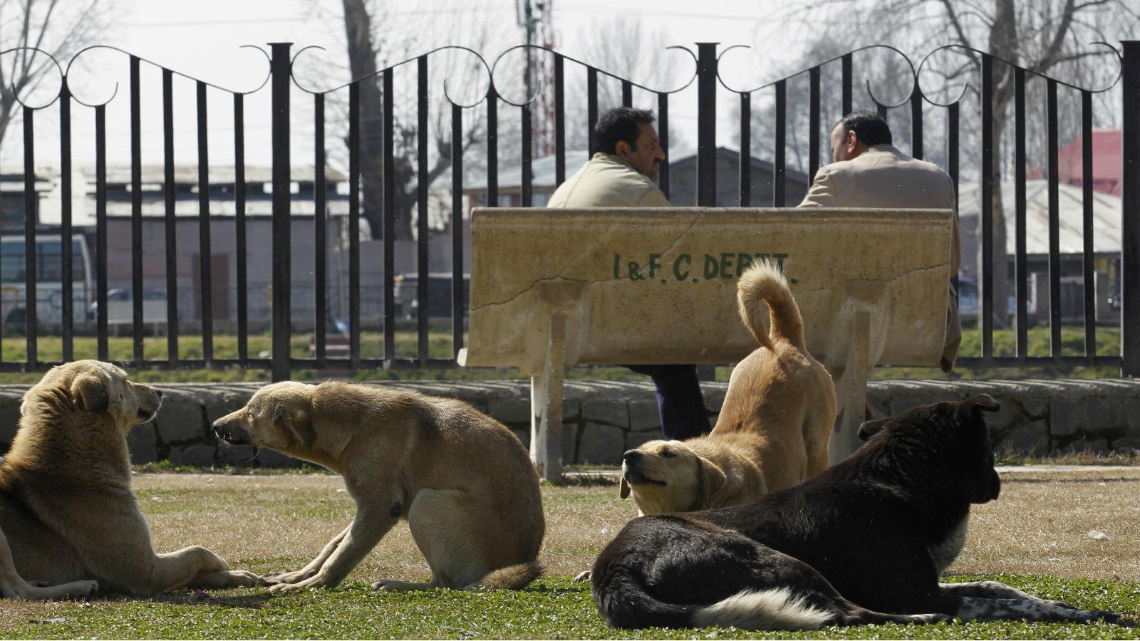 India-stray-dogs