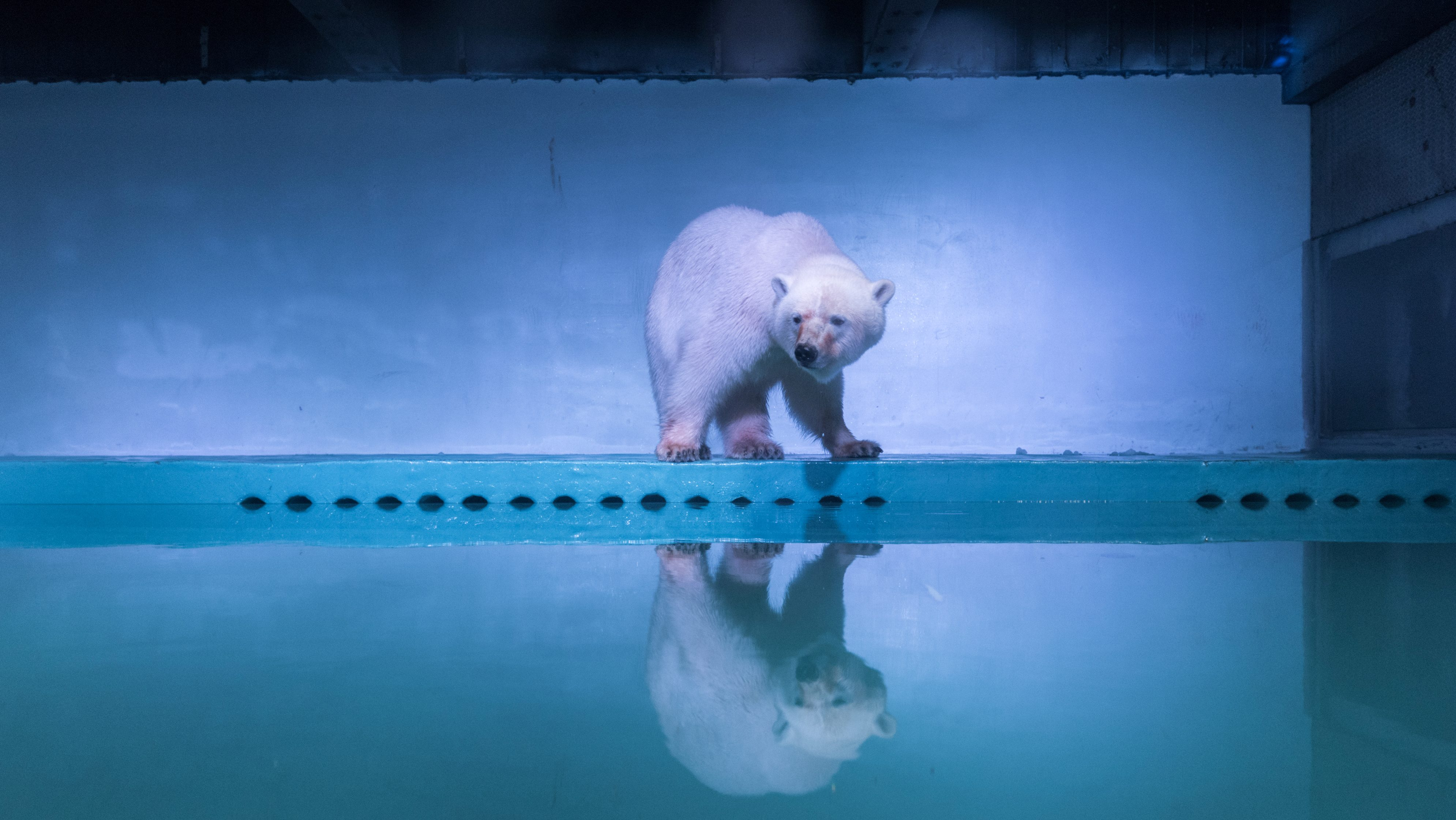 REFILE - ADDITIONAL CAPTION INFORMATIONA polar bear is seen in an aquarium at the Grandview mall in Guangzhou, Guangdong province, China, July 27, 2016. Picture taken July 27, 2016. REUTERS/Stringer ATTENTION EDITORS - THIS IMAGE WAS PROVIDED BY A THIRD PARTY. EDITORIAL USE ONLY. CHINA OUT. NO COMMERCIAL OR EDITORIAL SALES IN CHINA. - RTSK0PW