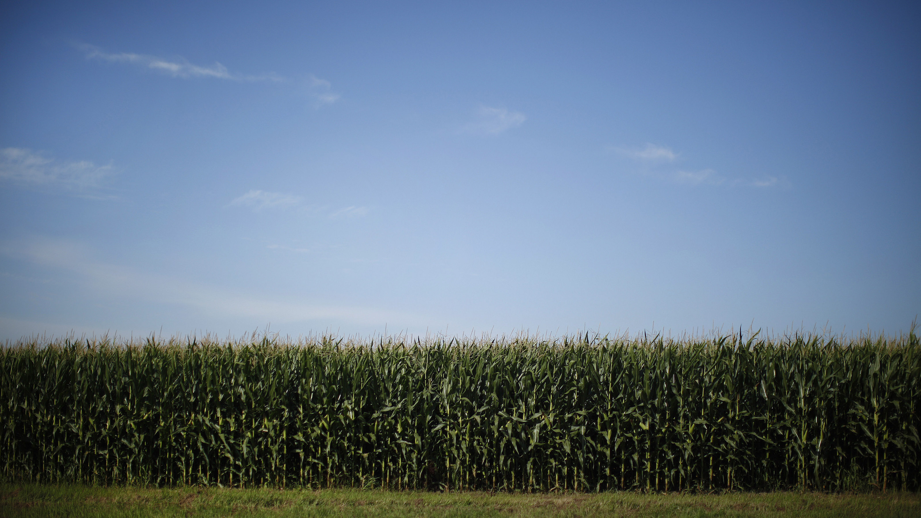 A field of corn is shown from the motorcade carrying U.S. President Barack Obama in between stops near Monona, Iowa, August 16, 2011. Obama is on a mid-west bus trip through Minnesota, Iowa and Illinois.      REUTERS/Jason Reed   (UNITED STATES - Tags: POLITICS SOCIETY BUSINESS) - RTR2Q01P