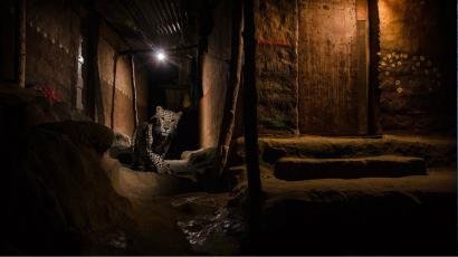 India-Nayan-Khanolkar-wildlife-photography