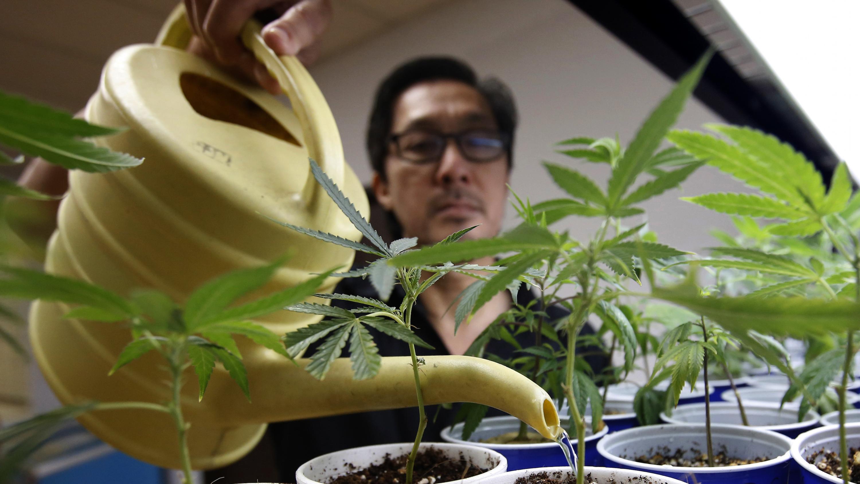 Election California Marijuana Legalization