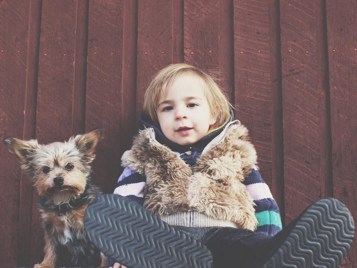 Scientists have found that the brains of dogs and children are