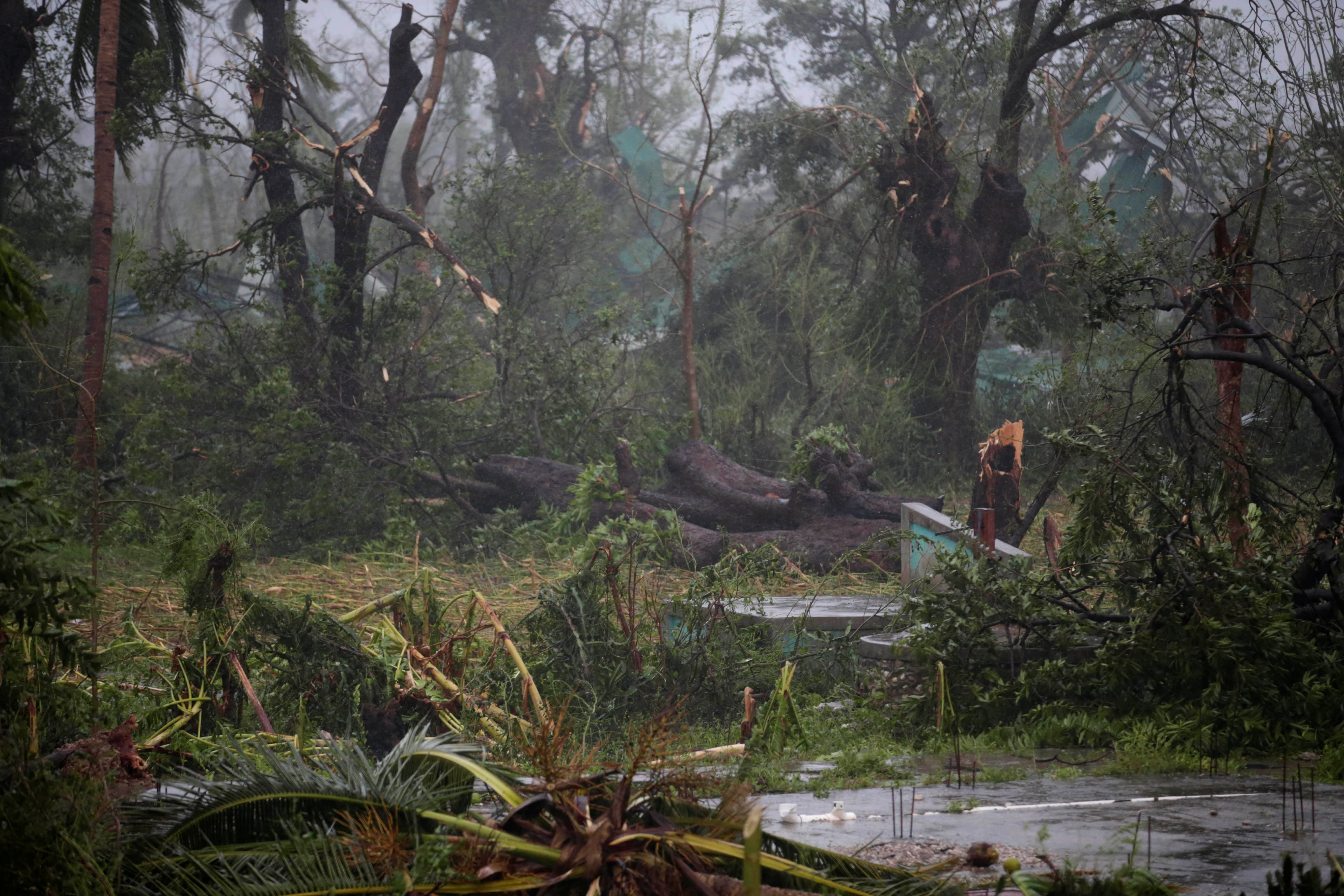 A view of trees damaged by the wind during Hurricane Matthew in Les Cayes, Haiti on Oct. 4.