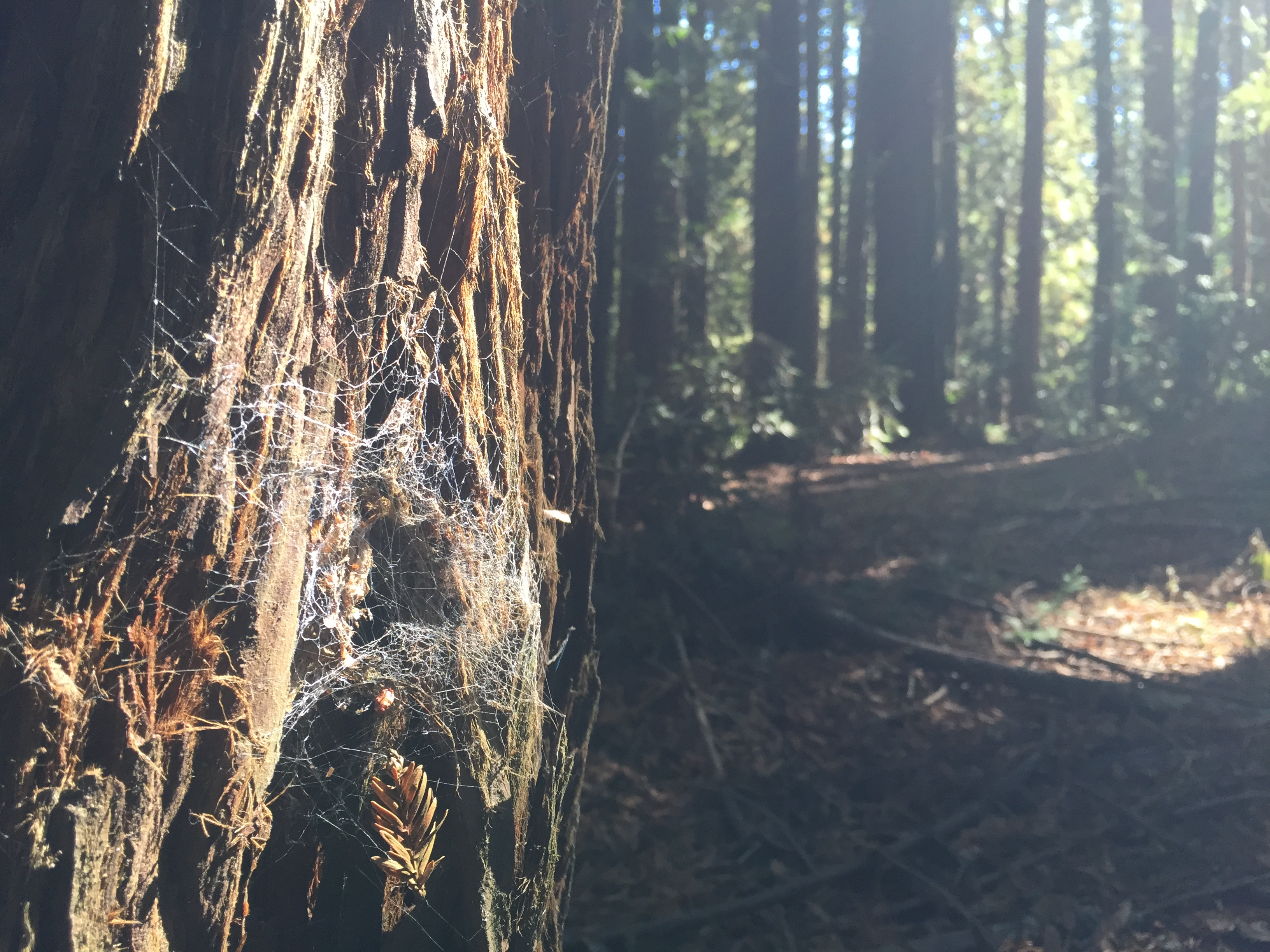 tree trunk and spider web