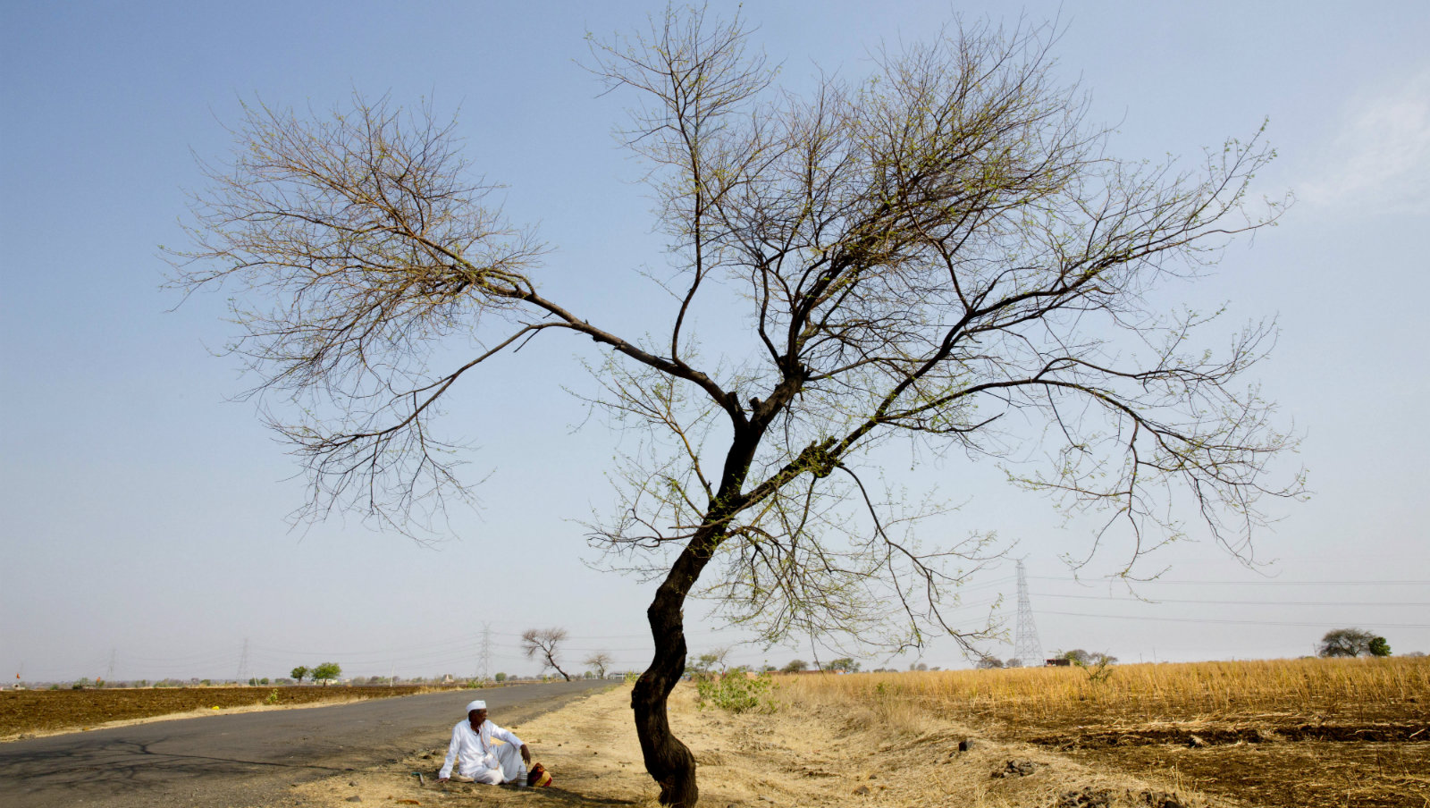 In this May 11, 2016, photo, an Indian farmer sits in the front of his destroyed crop of cotton, alongside a road in one of the drought affected region of Marathwada, in the Indian state of Maharashtra. Failed monsoons play havoc with millions of farmers in central India leading to crippling poverty and soaring suicides. Some 400 farmers have killed themselves so far this year in the parched Marathwada region, which is home to about 19 million people.
