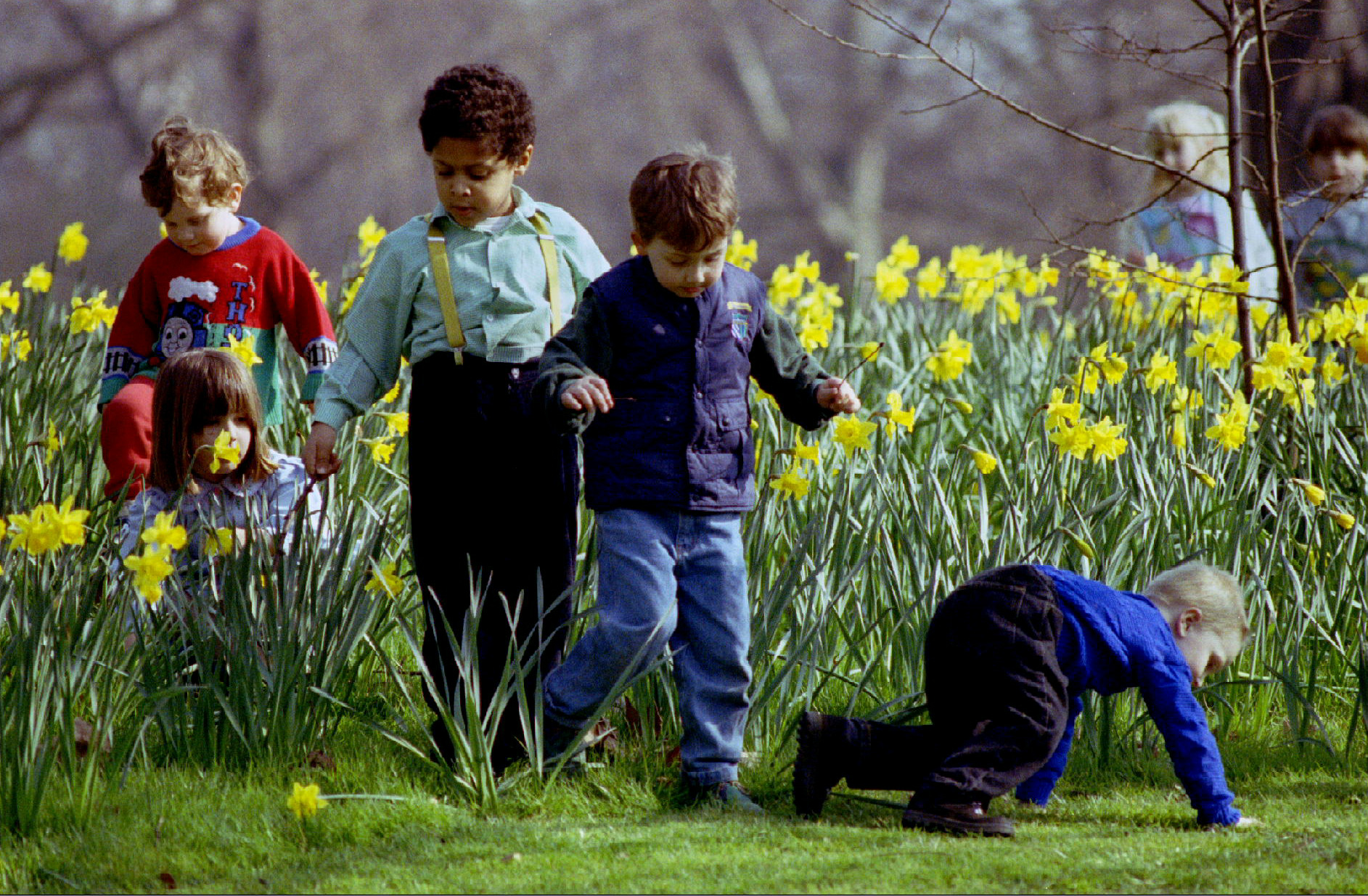 Nursery school children explore Hyde Park on one of the first warm days of Spring in London March 12. Daffodils responded by opening in the sun and basking in the unseasonal 15 degrees Centigrade temperature - RTXF26E