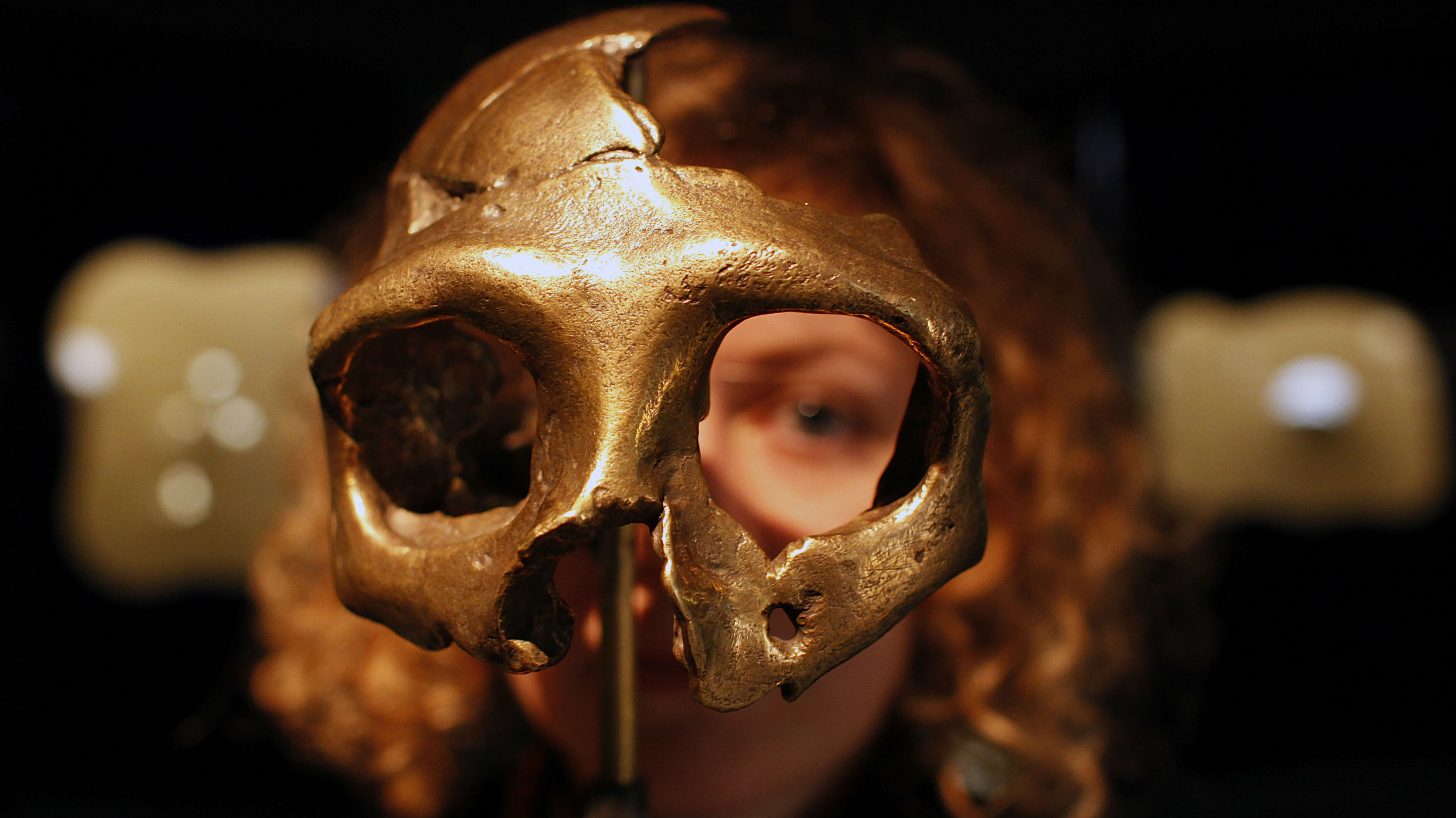 A woman looks through a the eyes of a Neanderthal skull.