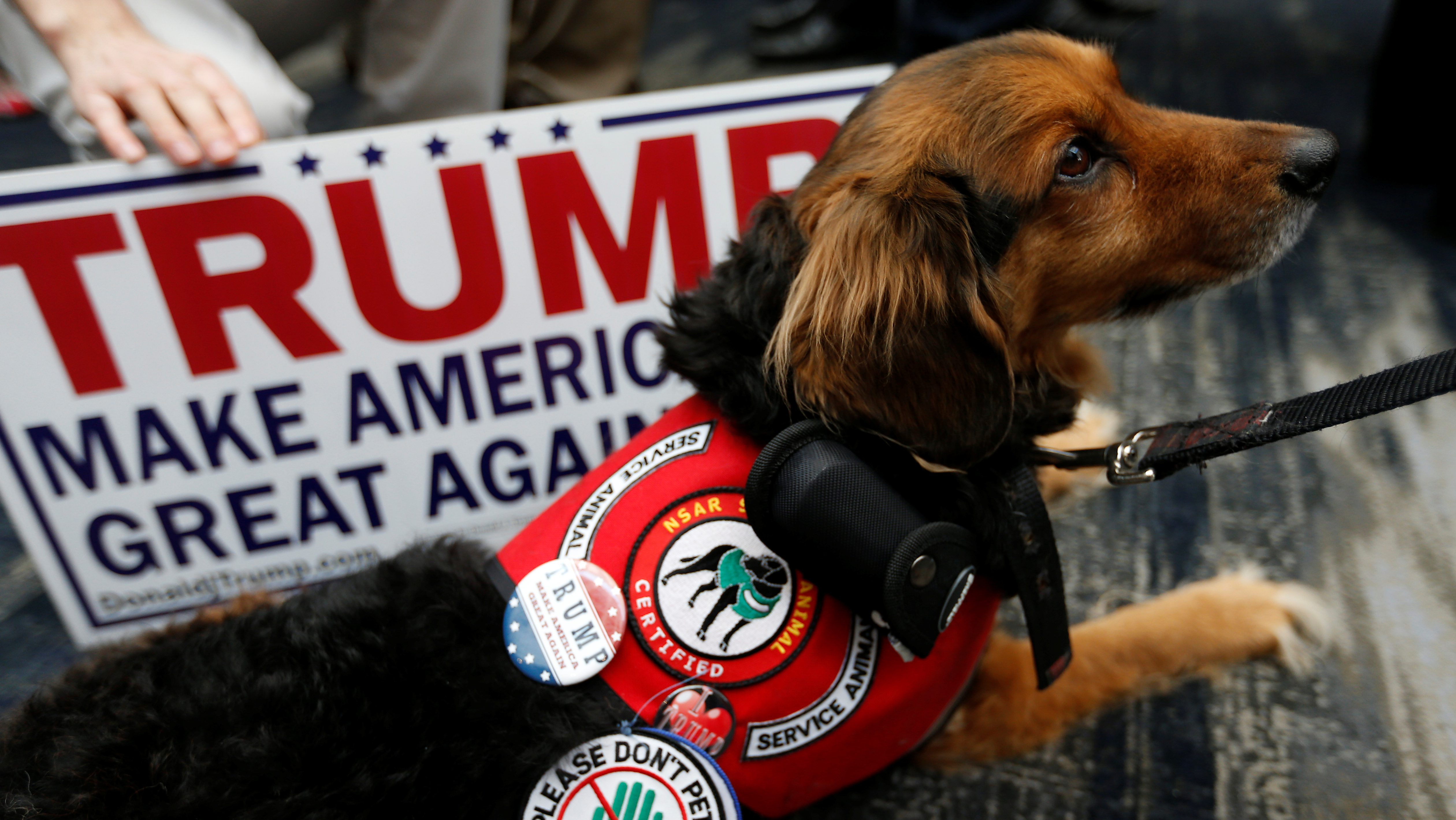 A service dog is seen wearing a pin in support of Republican U.S. presidential candidate Donald Trump during the California Republican Convention in Burlingame, California, U.S., April 29, 2016. REUTERS/Stephen Lam - RTX2C6V9