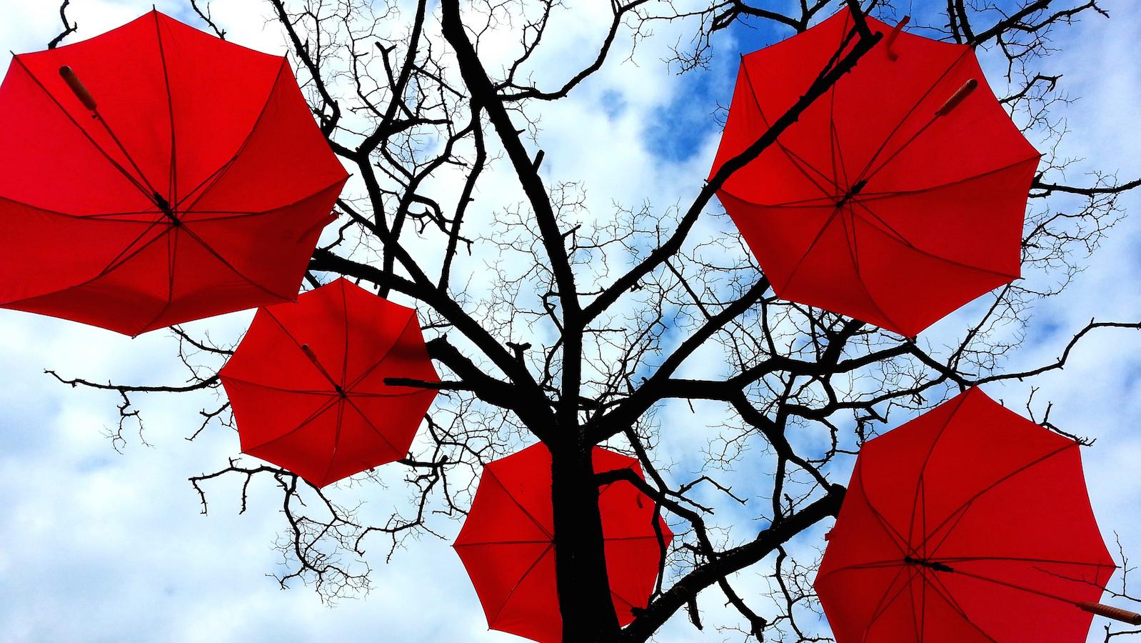 umbrellatrees