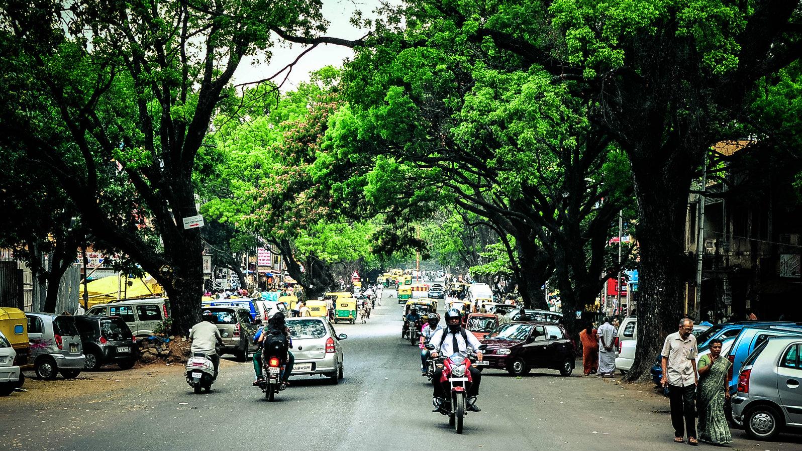 India-Bengaluru-trees