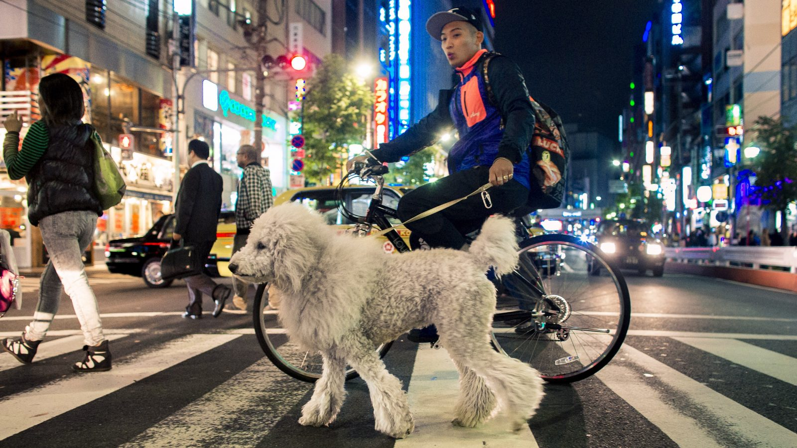 A man on a bike leads a dog across a pedestrian crossing in the Roppongi district in central Tokyo