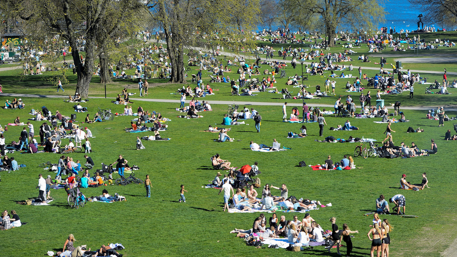 Crowds sun themselves in a park
