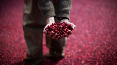 An Ocean Spray during cranberry harvest