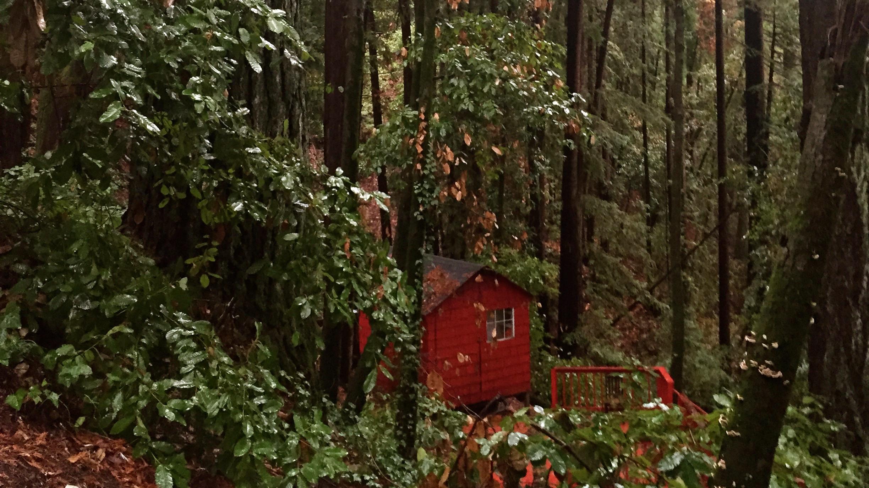 Big trees, tiny house.