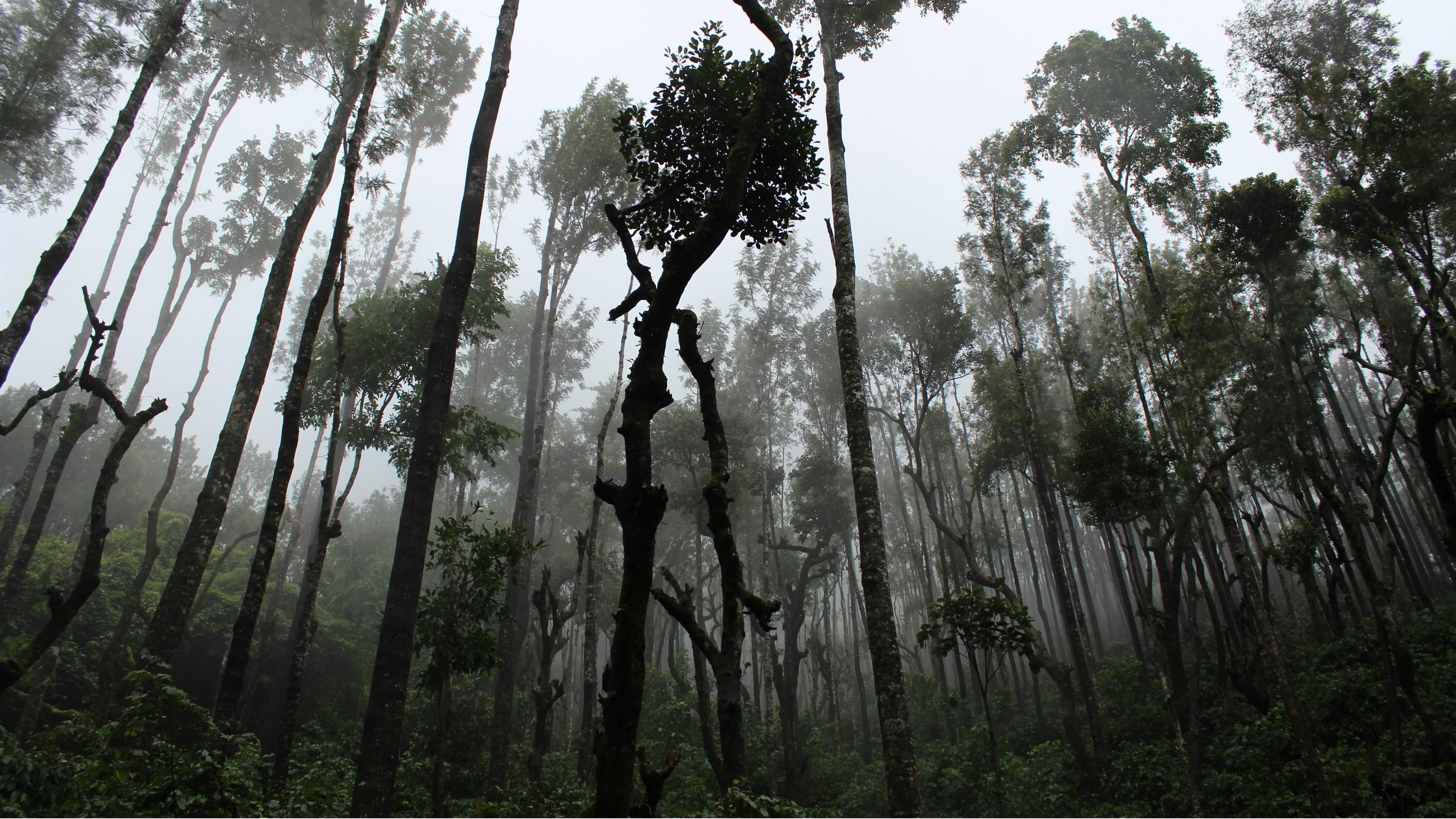 India-environmental-degradation