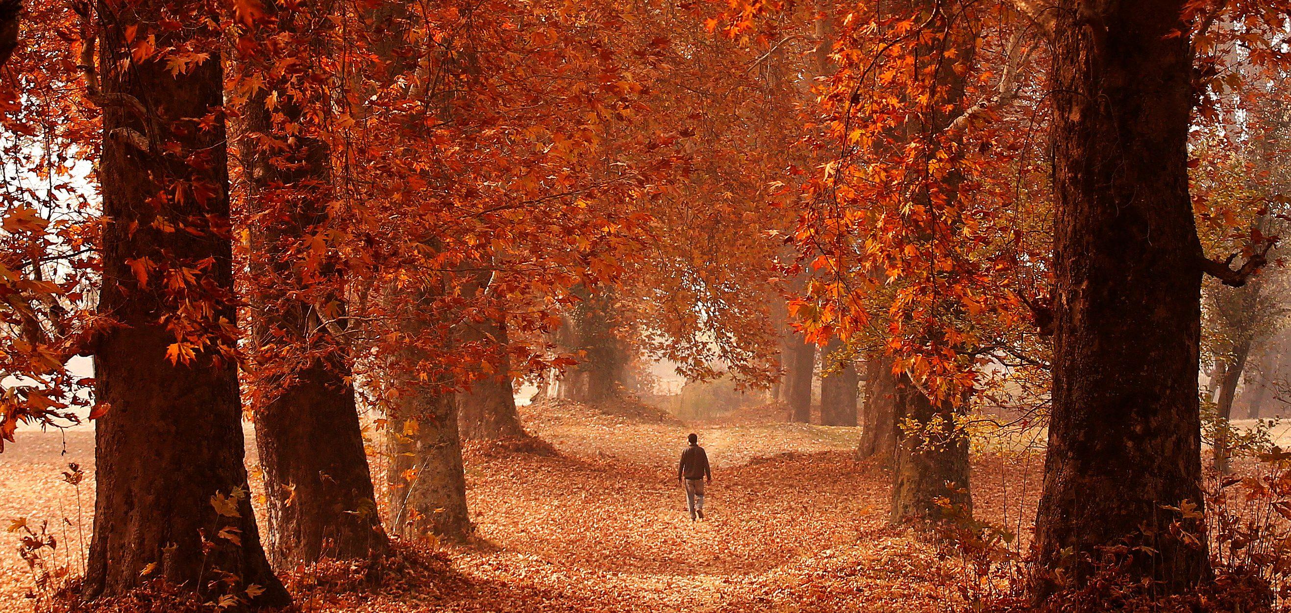 A man walks through a garden on an autumn day in Srinagar, India November 15, 2016.