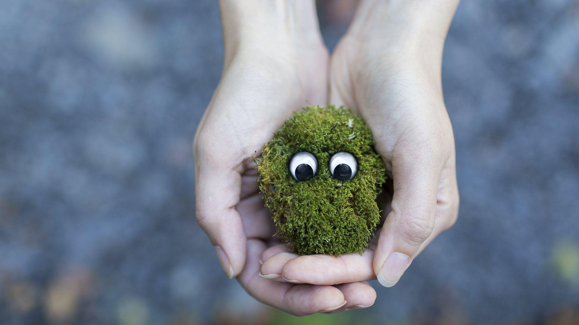 Moss poof Japan