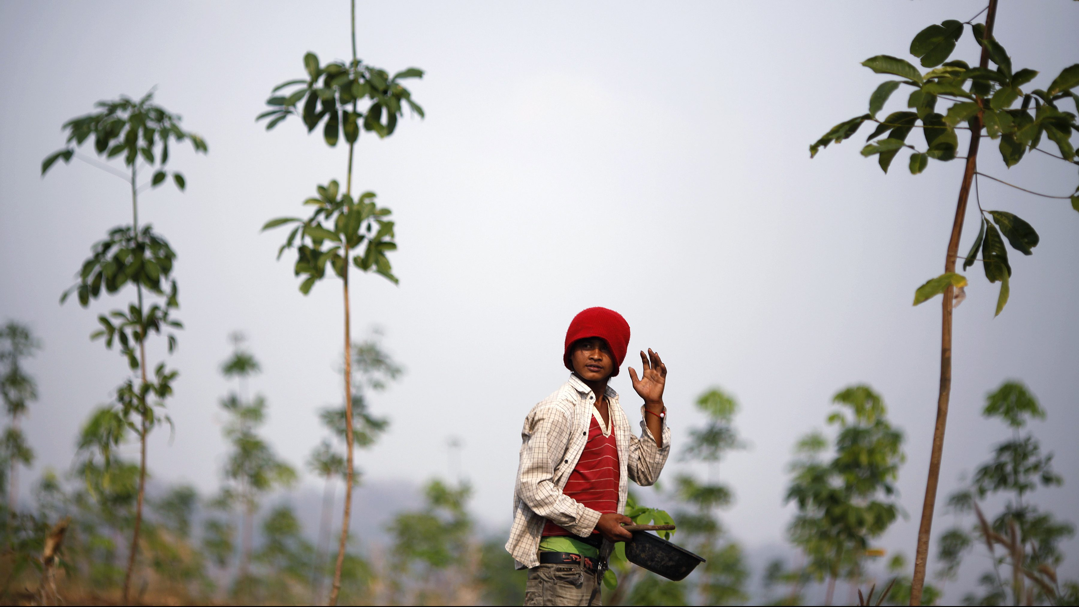 A migrant worker holds pumpkin seeds while working in a field