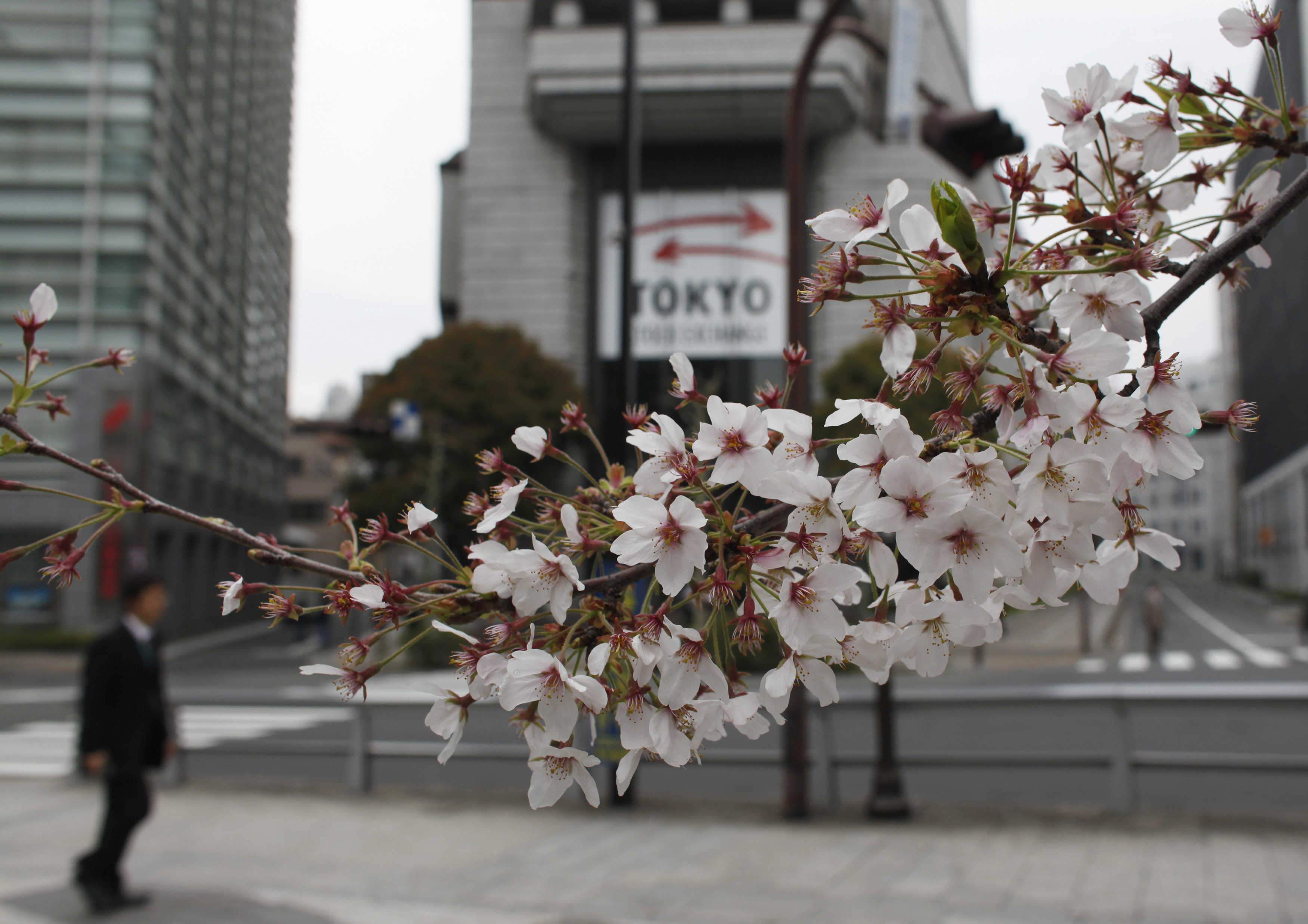 Cherry blossoms are seen in front of the Tokyo Stock Exchange building in Tokyo
