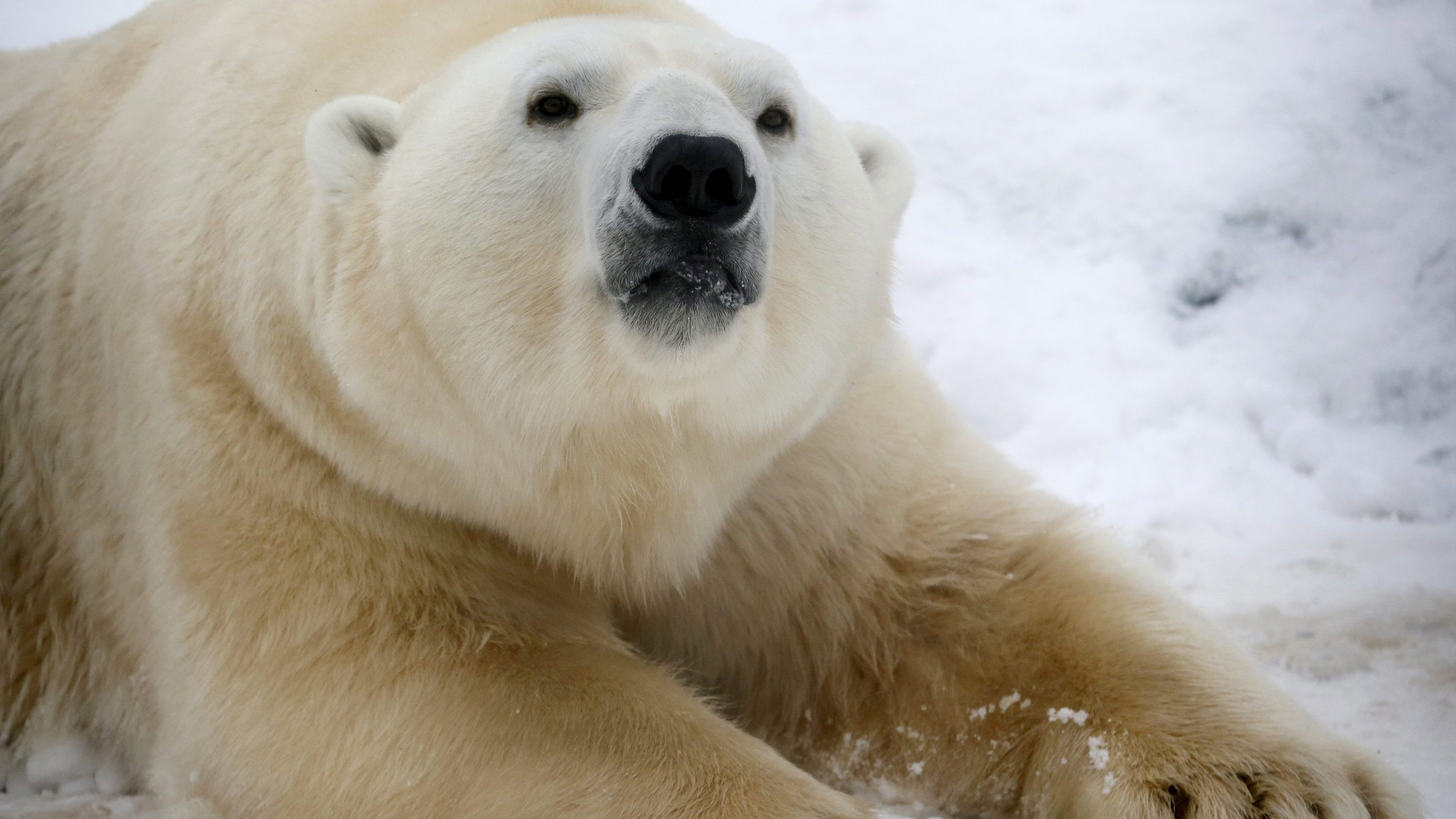 That Video Of A Polar Bear Petting A Dog Turns Out To Show Us A