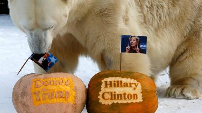 Polar bear Felix holds portrait of U.S. presidential nominee Trump in his mouth as it predicts result.