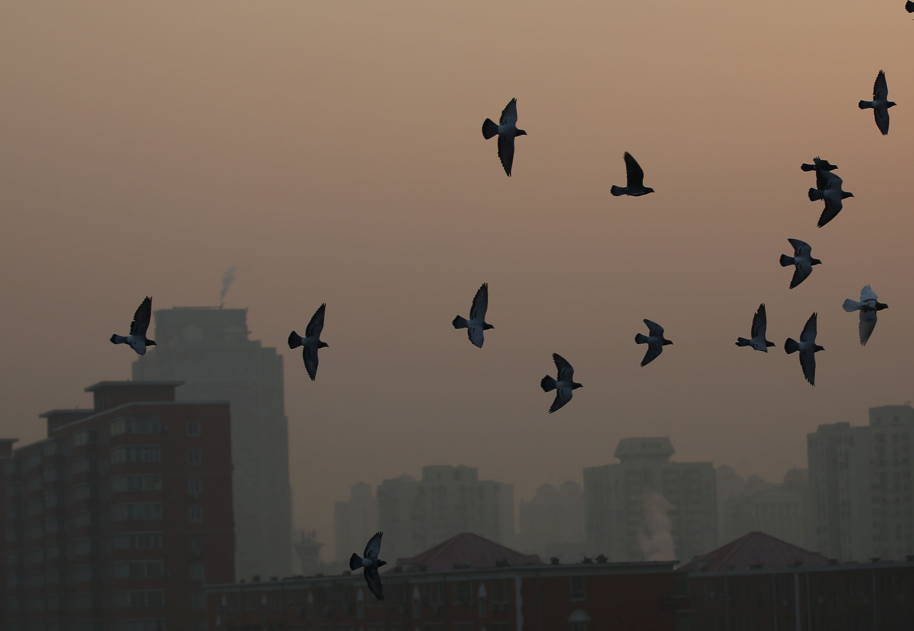 Pigeons fly in heavy smog during a polluted day in Beijing, China, December 19, 2016. REUTERS/Stringer ATTENTION EDITORS - THIS PICTURE WAS PROVIDED BY A THIRD PARTY. EDITORIAL USE ONLY. CHINA OUT. NO COMMERCIAL OR EDITORIAL SALES IN CHINA. - RTX2VLIT