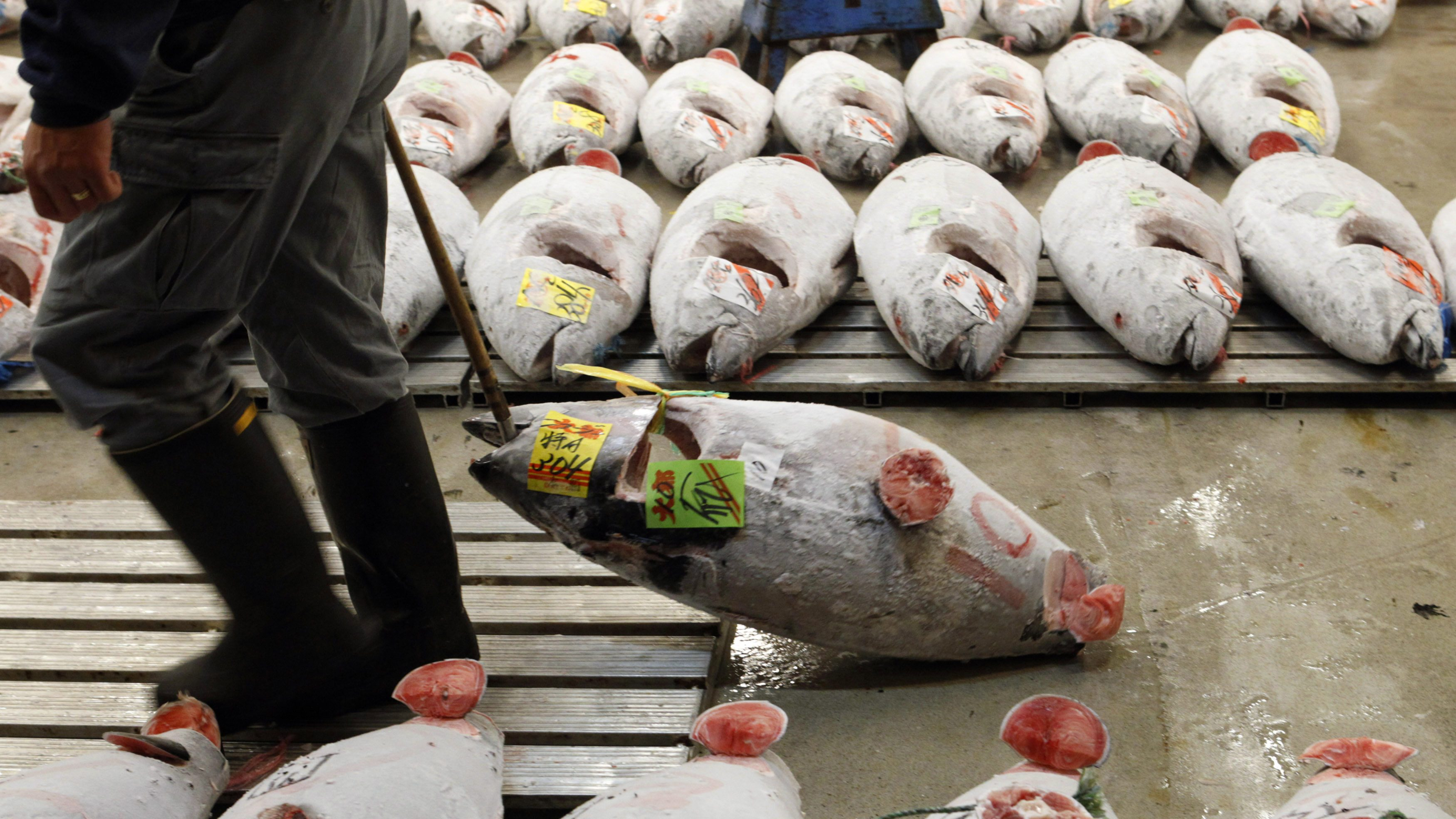 A wholesaler carries a frozen tuna between tuna laid out in rows at Tsukiji fish market, Japan's largest fish auction house, in Tokyo March 13, 2010.
