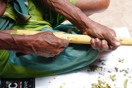 Waddugea Nirmal shaves off quills from the cinnamon plant at the Nirmal Cinnamon Farm in Galle, Sri Lanka.