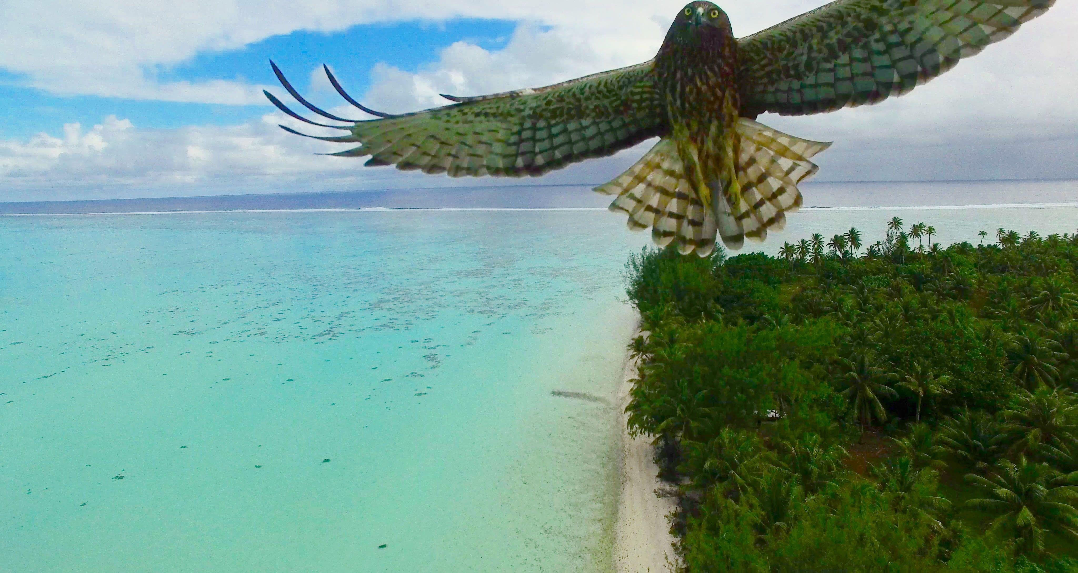 Best Drone Photos