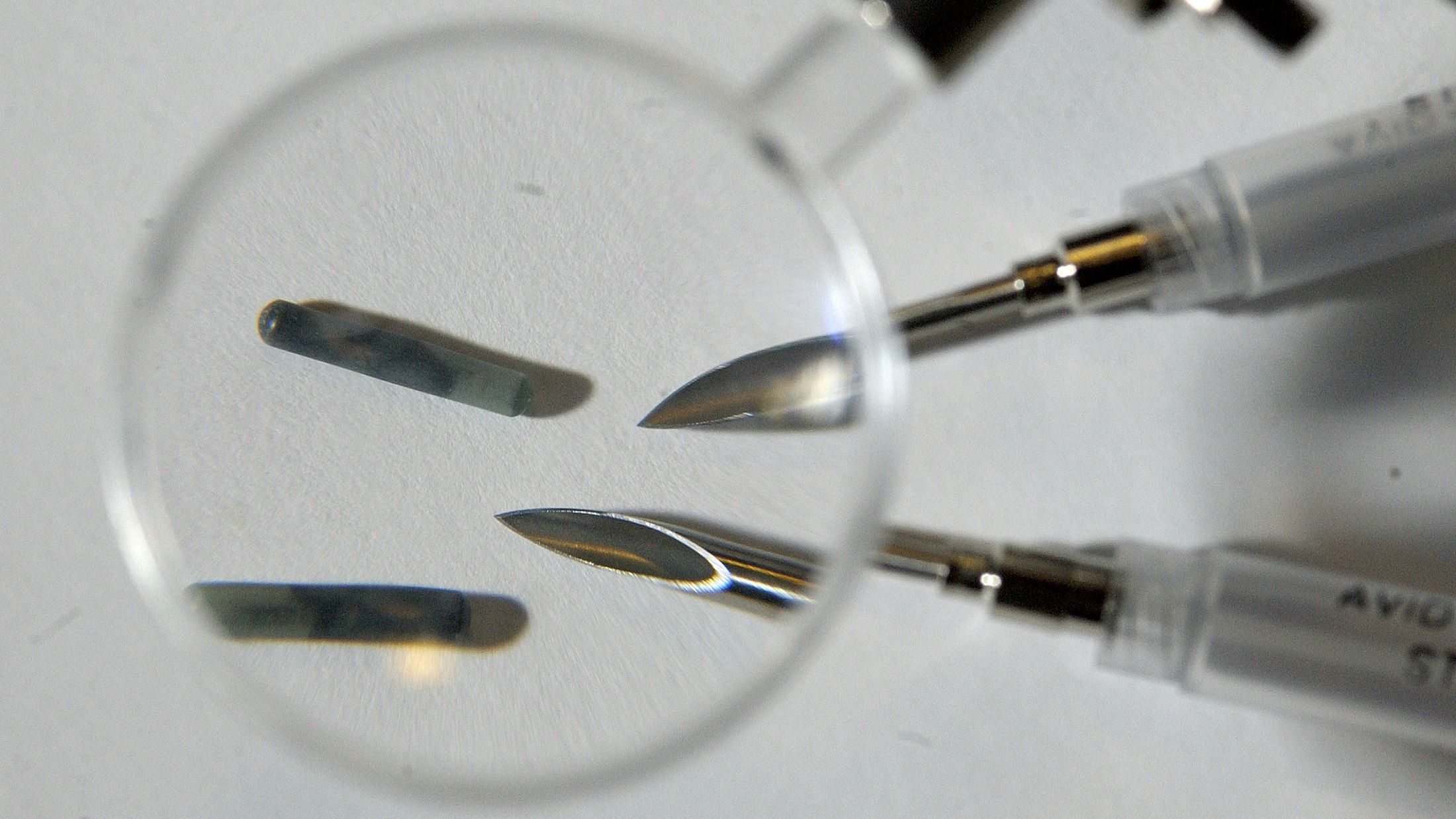 magnifying glass tech microchip computer