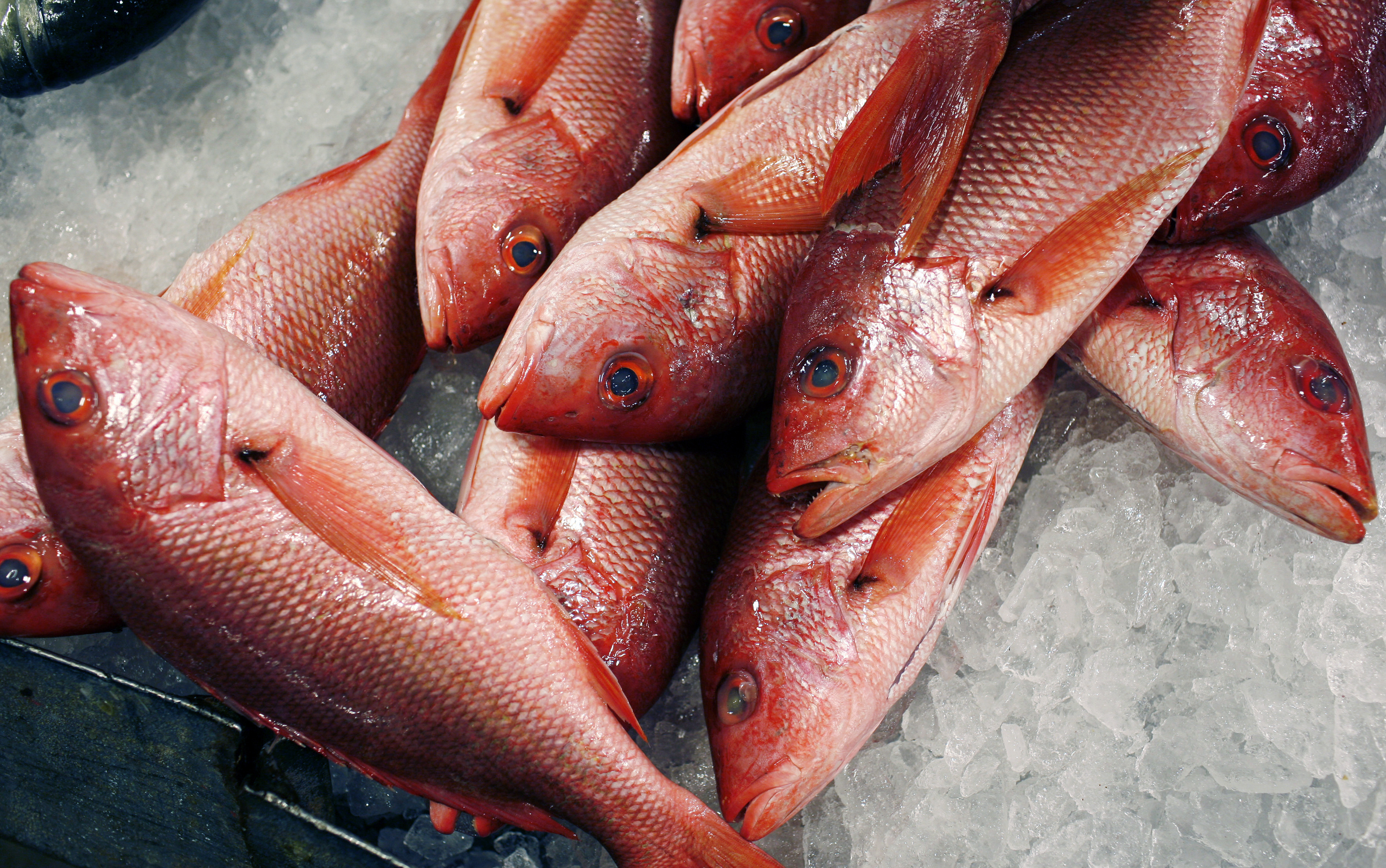 Red snappers lay on ice for sale at JMS Seafood, a fish wholesaler in the New Fulton Fish Market in the Bronx section of New York City June 21, 2010.