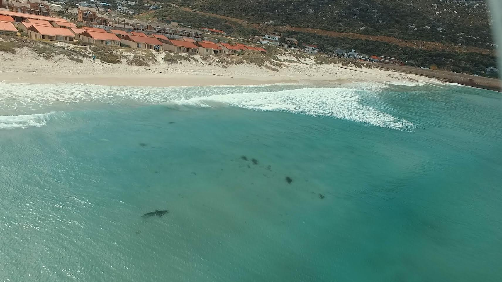 A copper shark spotted lurking off a Cape Town beach.