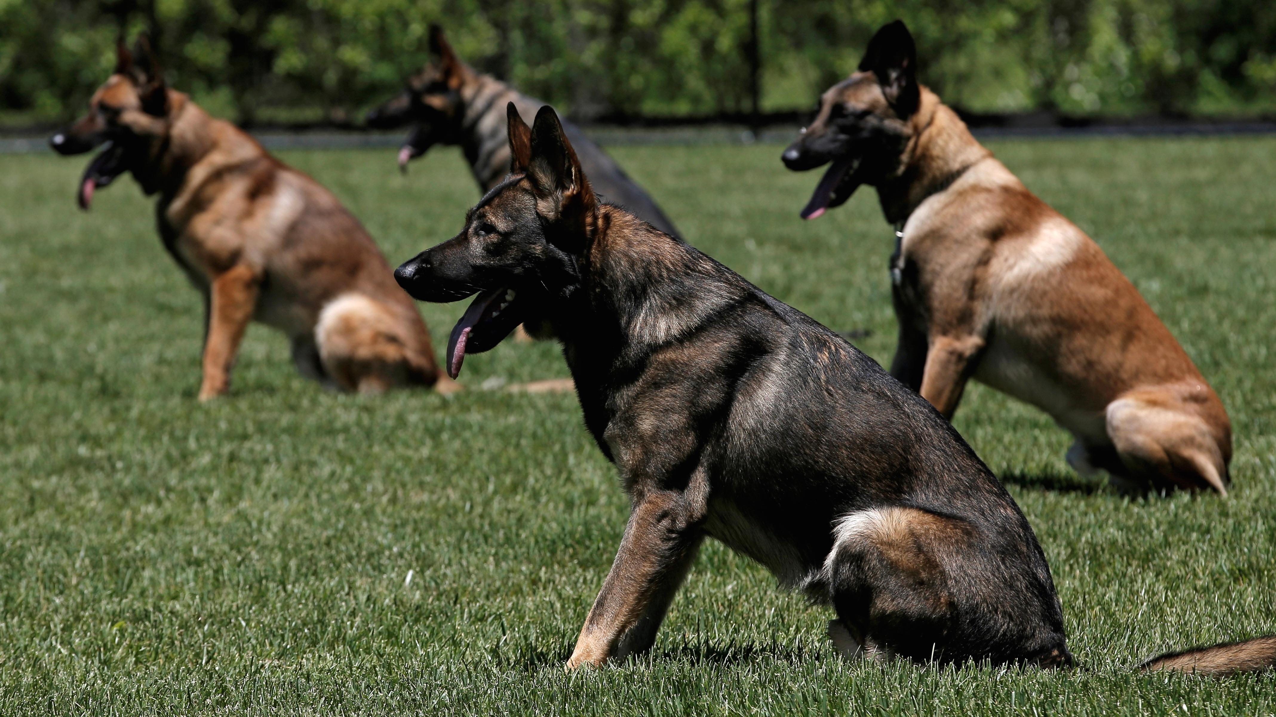 MTA Police K-9 explosive detection dogs.
