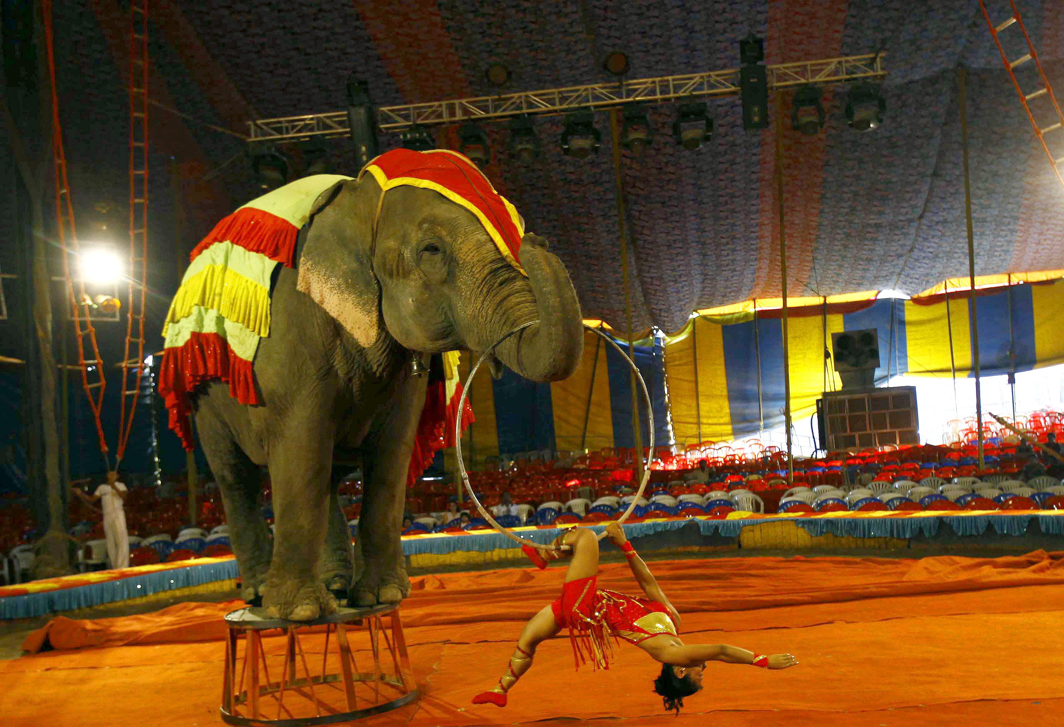 India Circus