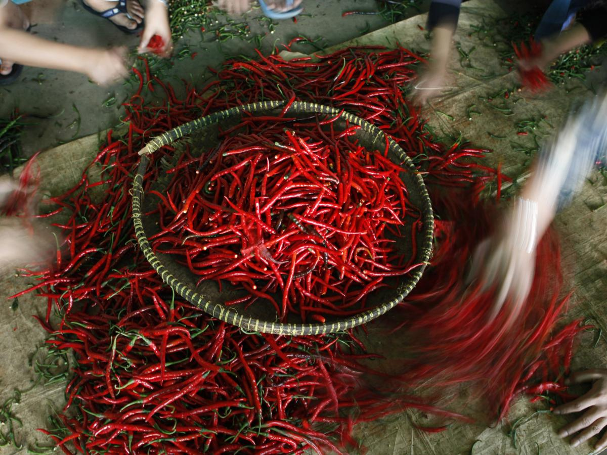 cecf21d78 After a bland new year, Bhutan is reversing an import ban on India's toxic  chillies — Quartz India