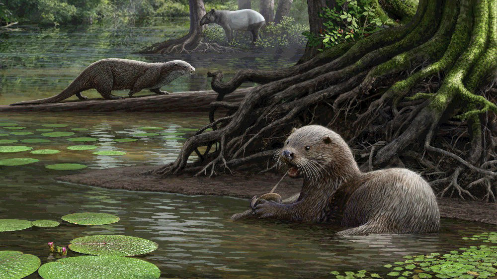 An artist's rendition of the massive, prehistoric otters.
