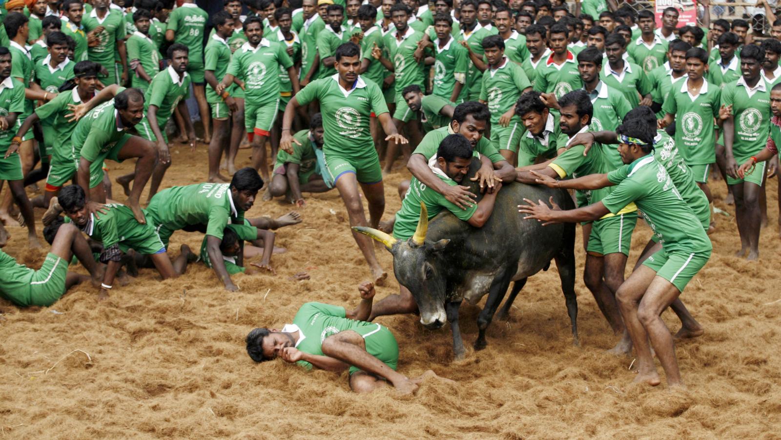 India-Tamil Nadu-Chennai-Jallikkattu-Narendra Modi