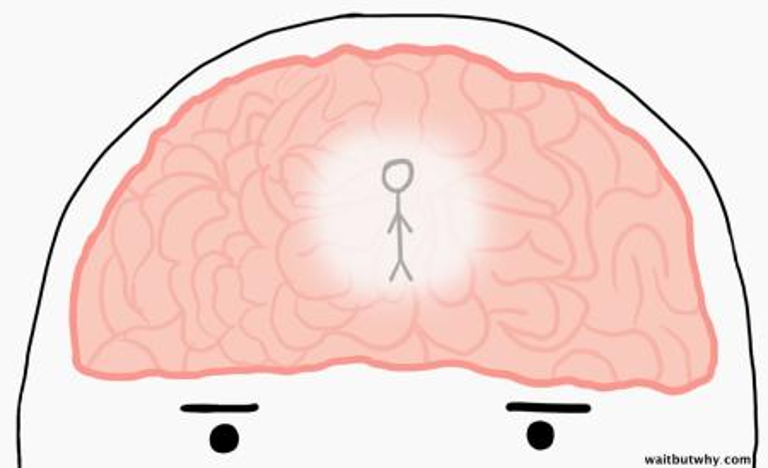 man standing in brain