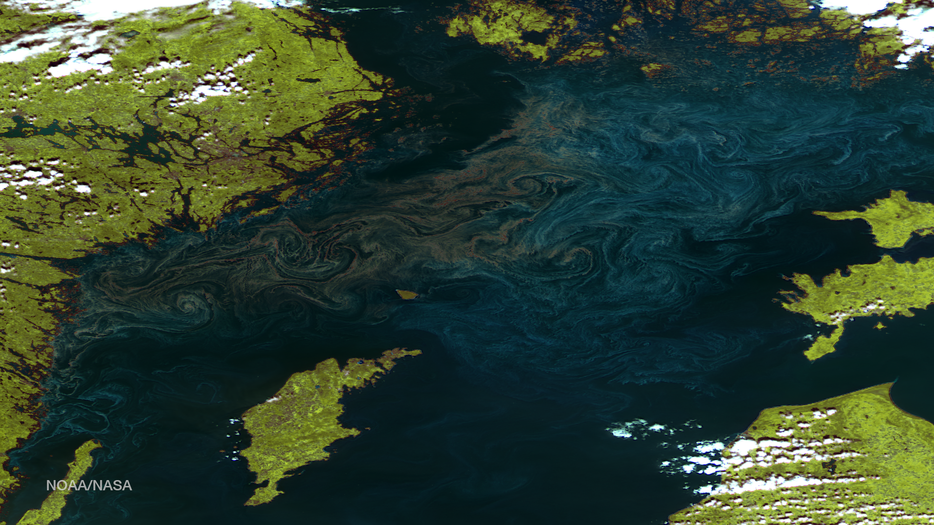 This image, taken by NOAA/NASA's Suomi NPP satellite on July 24, 2014, shows swirls of plankton blooms in the Baltic Sea