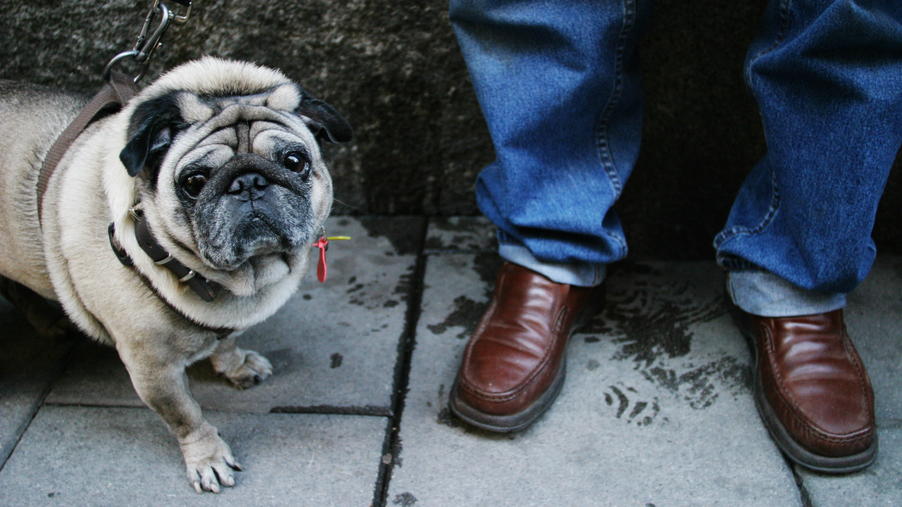 There's a wrong and a right way to talk to your dog, according to science