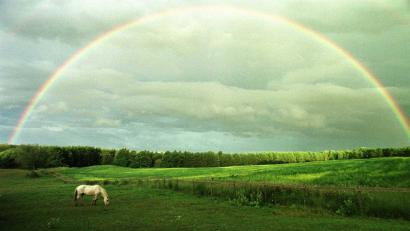a rainbow stretches across the sky while a horse grazes in a field