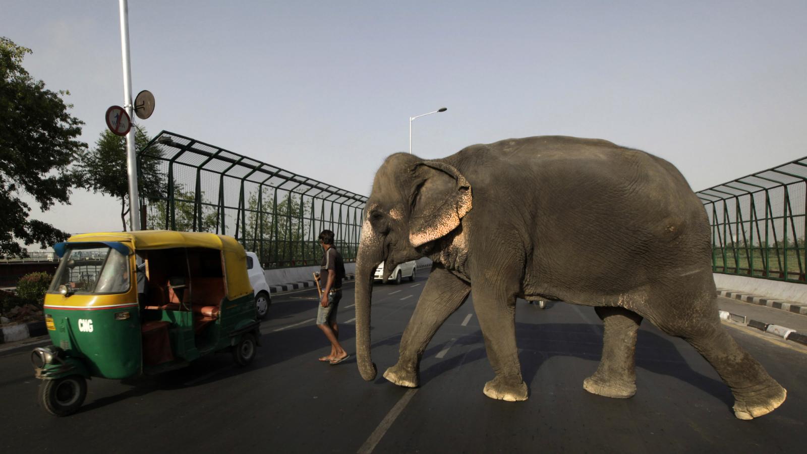 Driverless car autonomous India