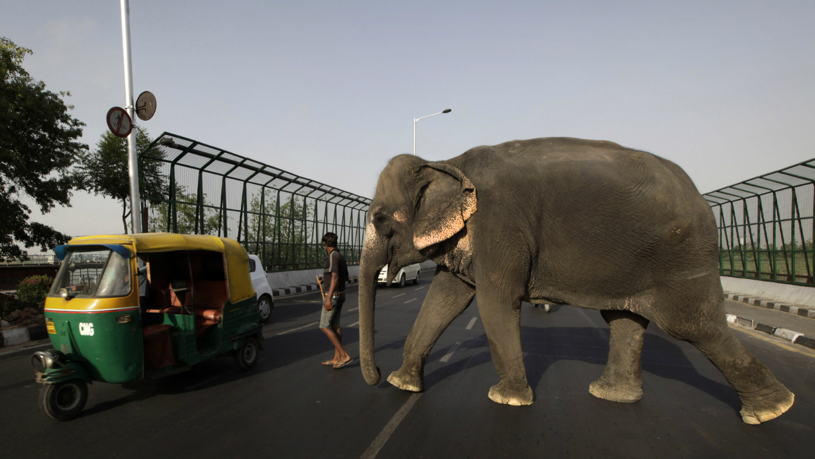 A mahout with his elephant crosses a busy road in New Delhi, India , Wednesday, May 30, 2012.