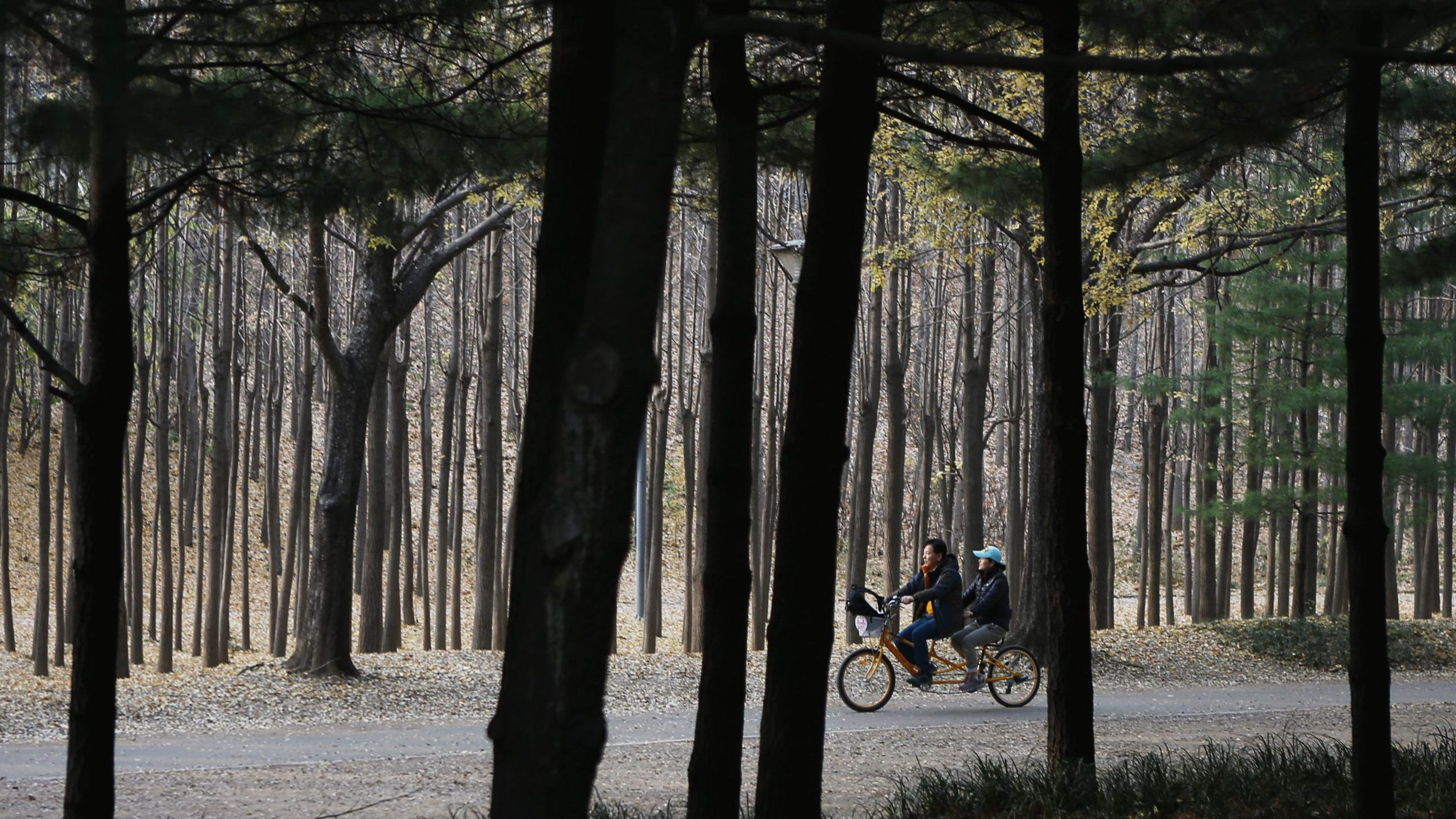 A couple rides a tandem bicycle through a forest on a late autumn day
