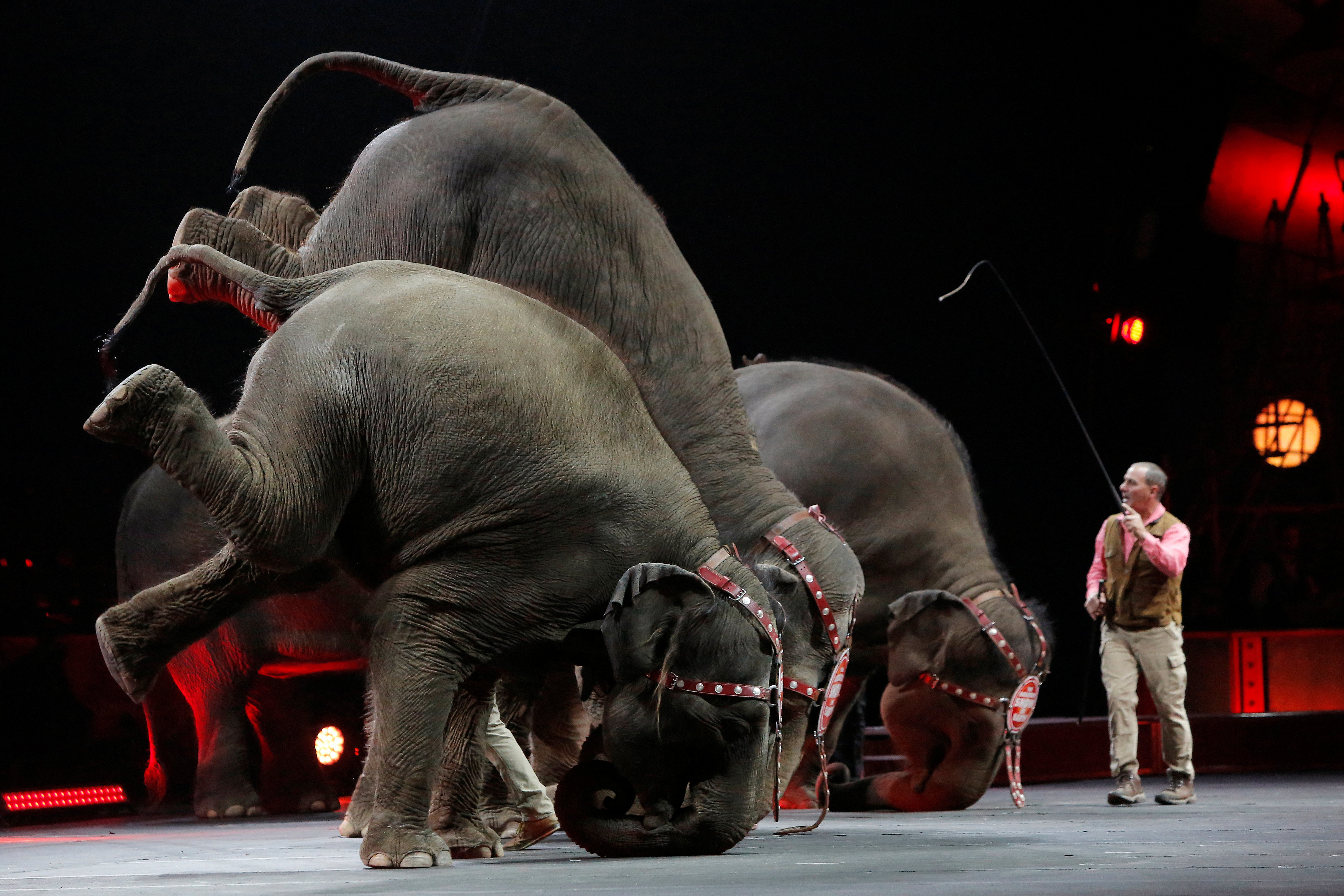 Elephants perform during Ringling Bros