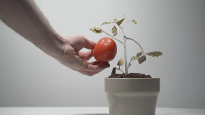Tomatoes are tasteless but they don't have to be, because science