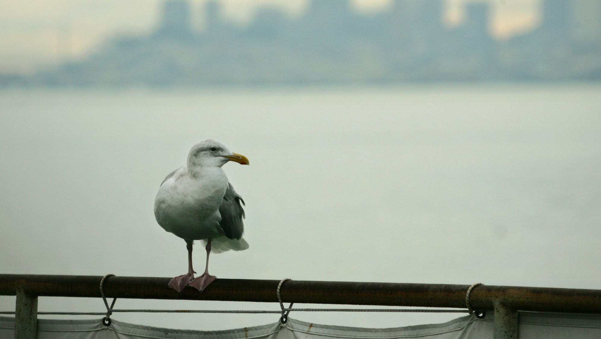 A seagull rests on a rail in Sausalito, Calif., Monday, Jan. 3, 2005, with the San Francisco skyline in the background. In Northern California, skies were clearing after a week of winter storms that caused long traffic delays and slippery roads over the holiday weekend. The National Weather Service predicted another storm later this week, with more snow possible in higher elevations.
