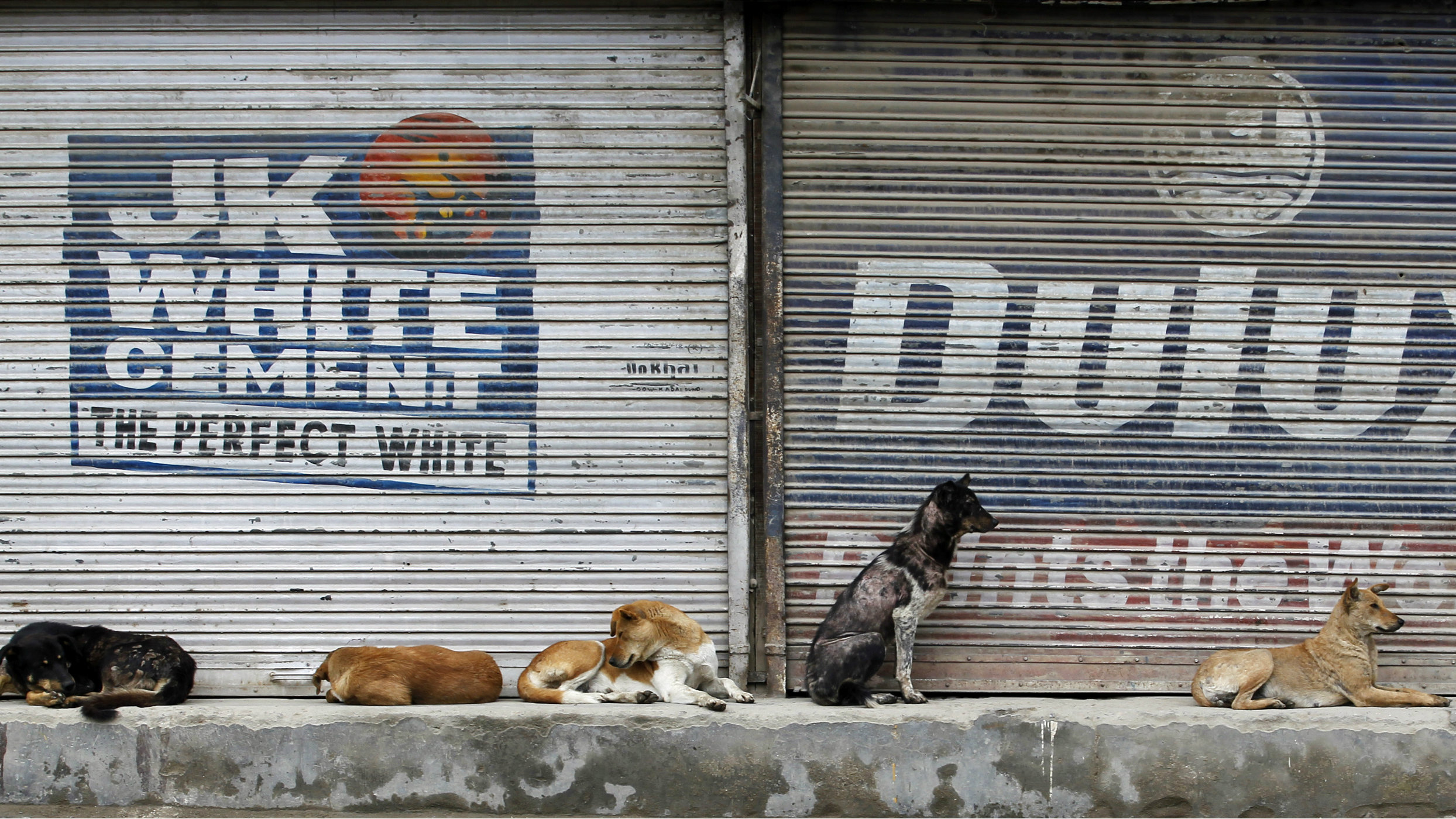 India-dogs-migration