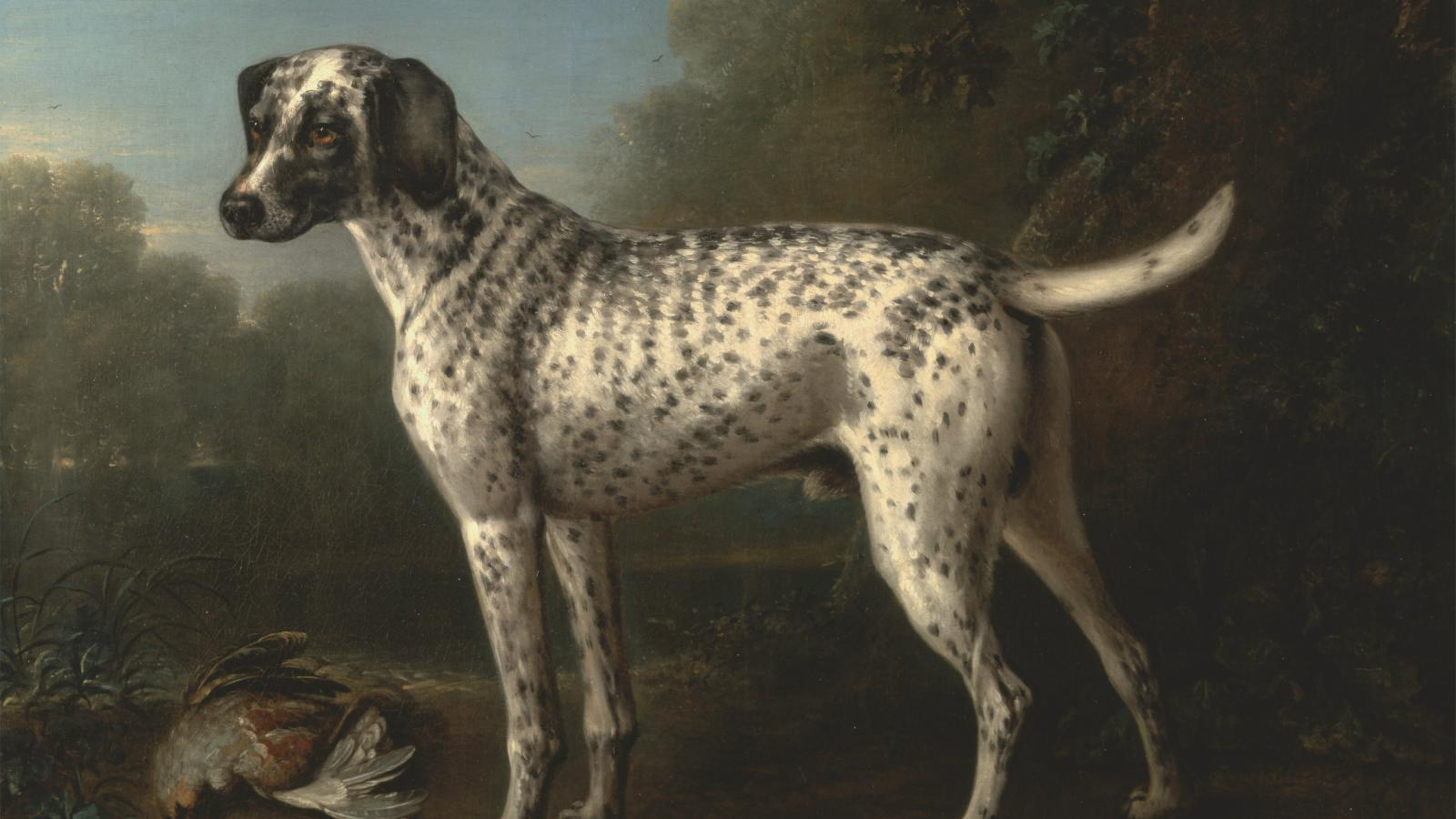 Diamond Collars And Oil Portraits The Luxurious History Of Dogs In India
