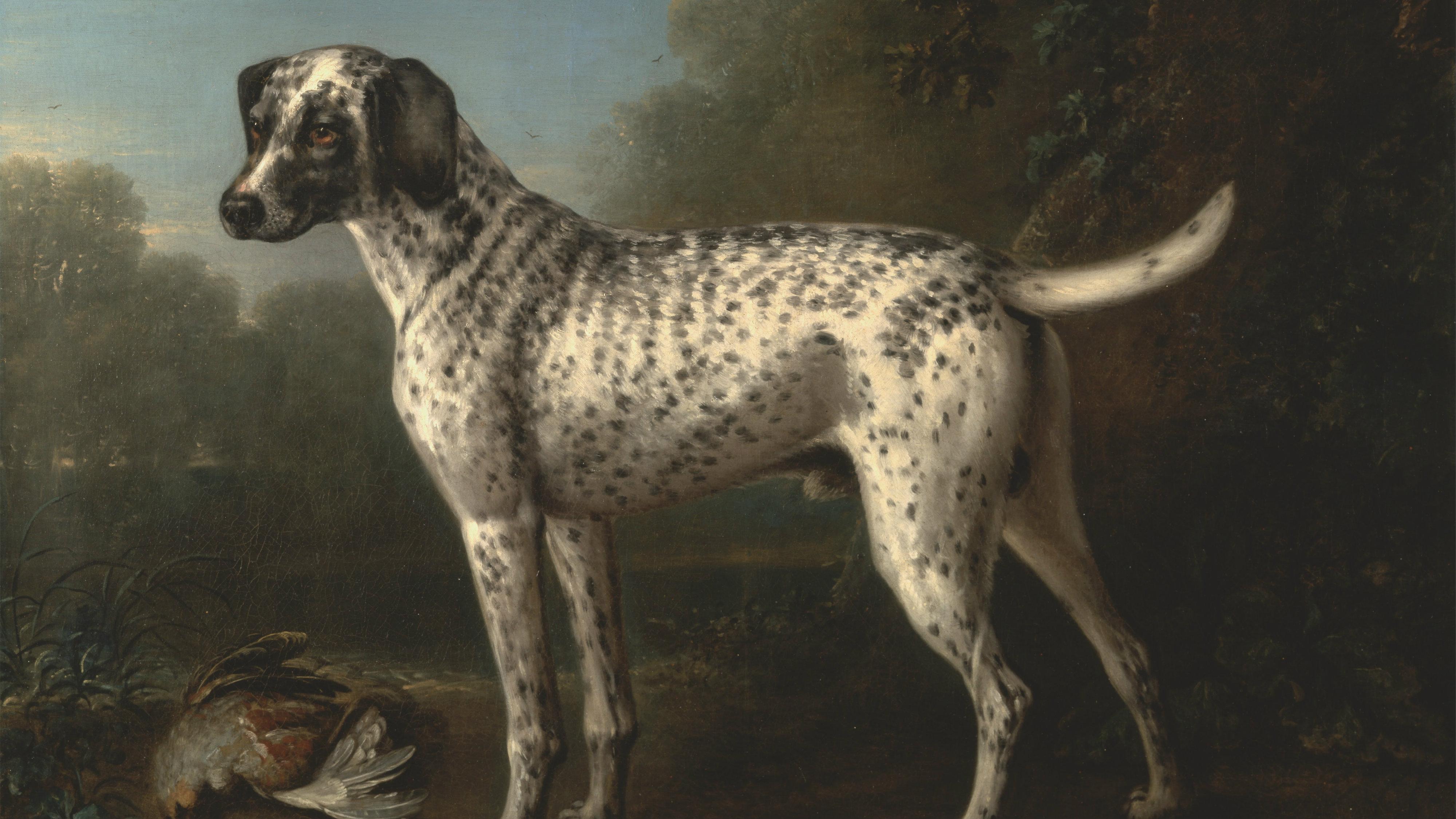 India-dog-history-nawab-British-raj